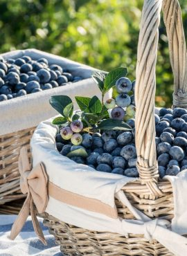 Ягоди лохини (чорниці садової)   Еко Карпати