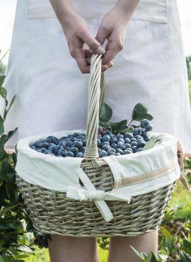 Ягоди чорниці садової | Еко Карпати