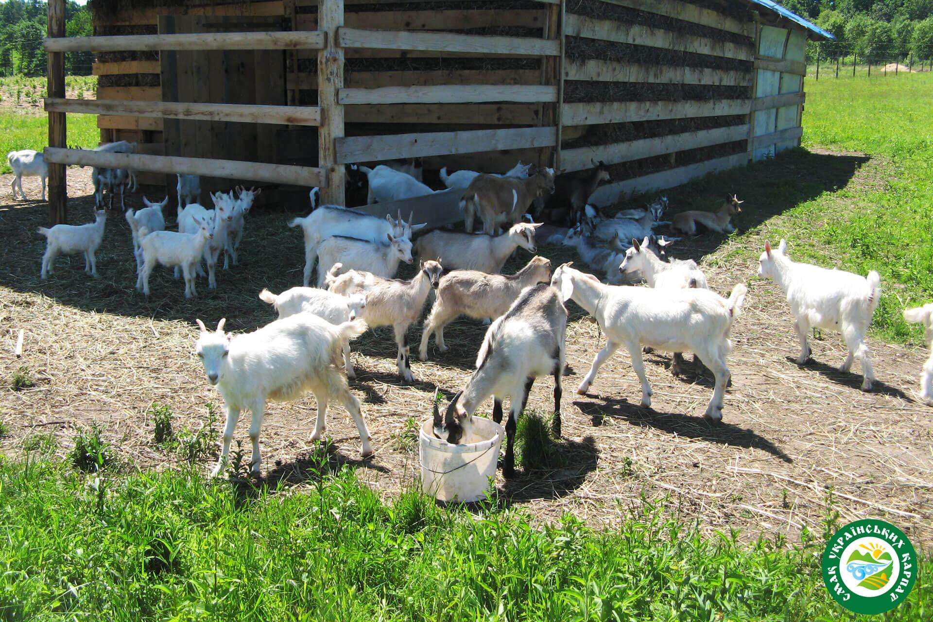 Козина ферма | Еко Карпати